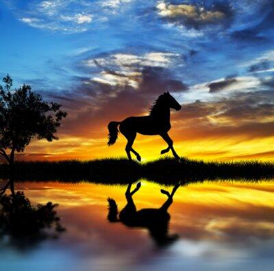 Canvas print caballo salvaje en el lago