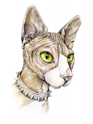 Canvas print Canadian sphinx in a collar with thorns. Naked cat on a white background. Watercolor drawing