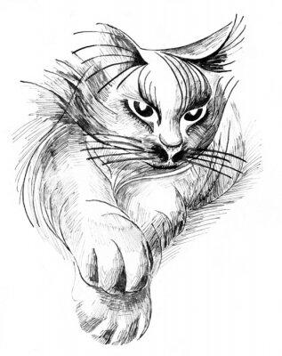 Canvas print cat
