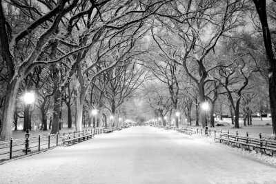 Canvas print Central Park, NY covered in snow at dawn