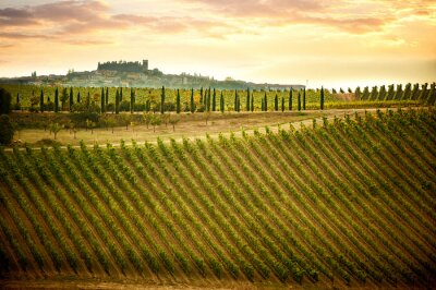 Canvas print Chianti hills with vineyards and cypress. Tuscan Landscape between Siena and Florence. Italy