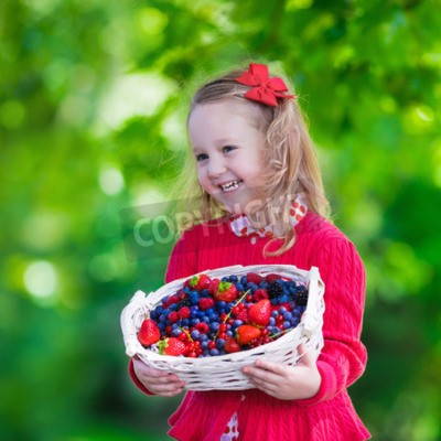 Child picking berries on a farm. Little girl eating strawberry, raspberry, blueberry, blackberry, red and black currant. Kids eat berry. Healthy nutrition for children. Toddler kid with fruit basket.