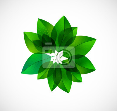 Circle of green leaves isolated on white