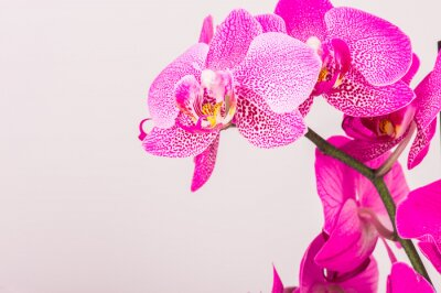 Canvas print Close-up of orchid blossom