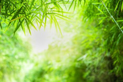 Canvas print Closeup beautiful view of nature green bamboo leaf on greenery blurred background with sunlight and copy space. It is use for natural ecology summer background and fresh wallpaper concept.