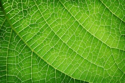 Canvas print Closeup of a green leaf