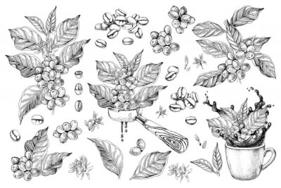 Canvas print Coffee designs set with branches, beans, portafilter and cup with splash