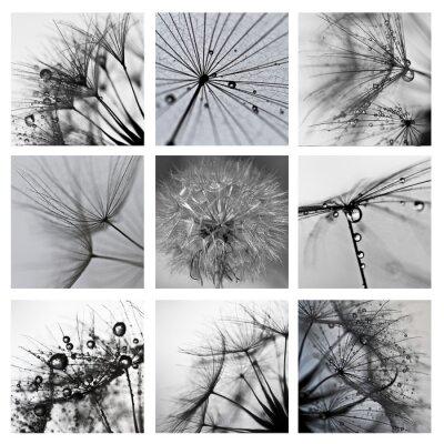 Canvas print Collage ze zdjęć makro wielkiego dmuchawca