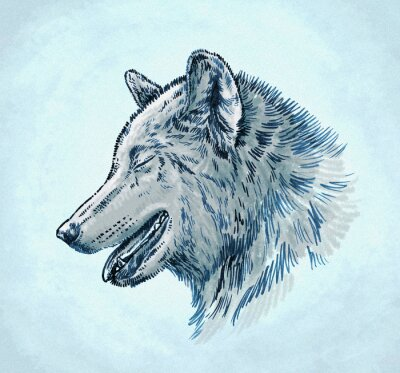Canvas print color engrave ink draw wolf illustration