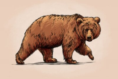 Canvas print color engrave isolated grizzly bear