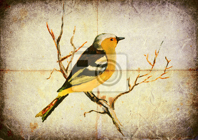 Colorful bird of our area.  The Finch