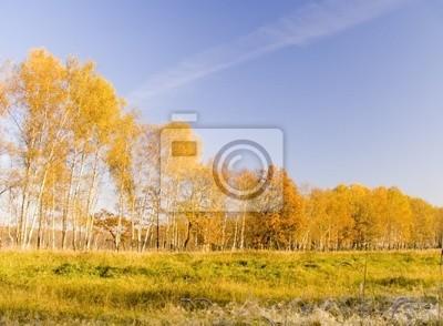 colourful autumn landscape