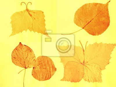 composition, set of dried leaves, applique, background, creativity.Collage.Toned  image.