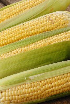 Canvas print corn cob