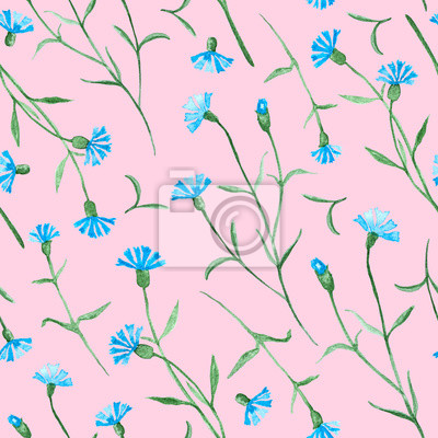 Cornflower plant with flowers, blossom watercolor painting - seamless pattern on pink background