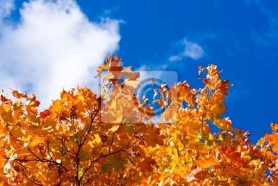 Canvas print crone of a autumn tree