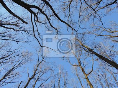 Canvas print Crones of autumn trees fallen leaves