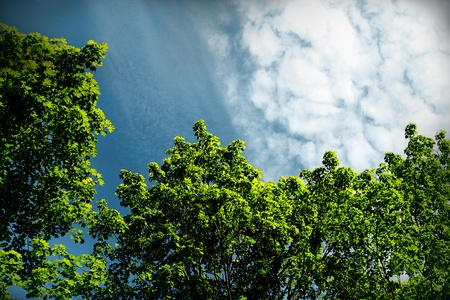Canvas print Crones of trees against blue sky background.