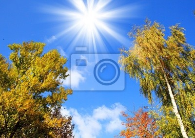 Canvas print Crones of trees and the solar sky