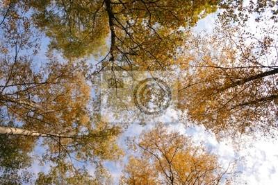 Canvas print Crones of trees in autumn