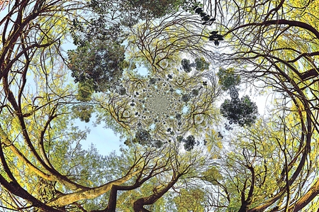 Canvas print Crones of trees with imposition of various conversion effects, spherical bias and twisting