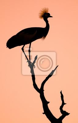 Crowned Crane Bird Silhouette