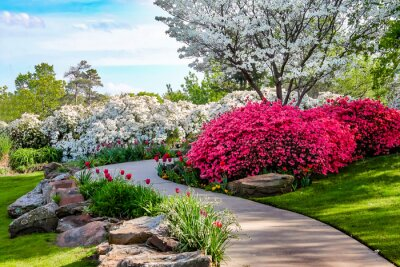 Canvas print Curved path through banks of Azeleas and under dogwood trees with tulips under a blue sky - Beauty in nature