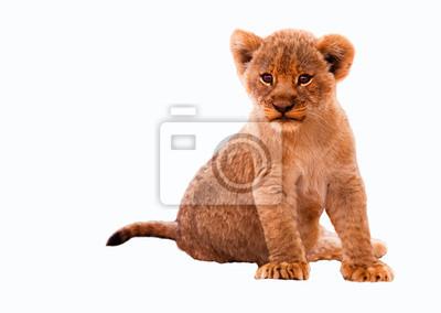Canvas print Cute Lion Cub