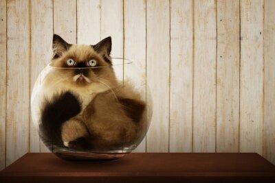 Canvas print Cute persian cat inside glass bowl