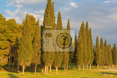 Cypress trees landscape summer sunset evening forest meadow