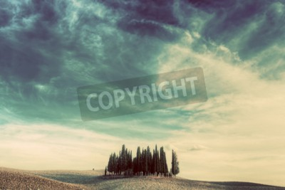 Canvas print Cypress trees on the field in Tuscany, Italy at sunset. Tuscan landscape in vintage, retro mood