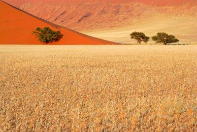 Desert grasses, sand dune and trees, Sossusvlei, Namibia