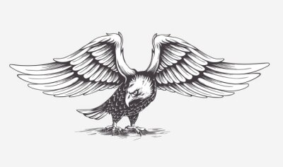 Canvas print Detailed Hand Drawn Eagle. Vector.