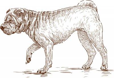 Canvas print dog on a walk