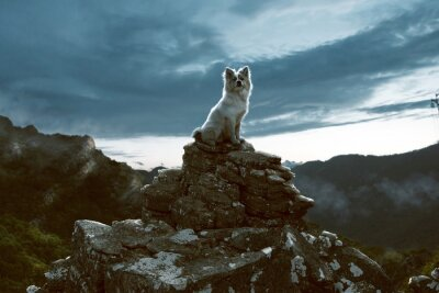 Canvas print Dog sits on a rock in the mountains