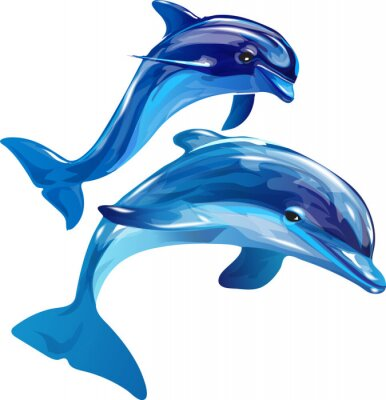 Canvas print dolphins white