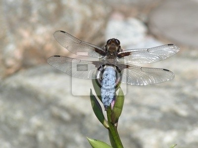 dragonfly and plant