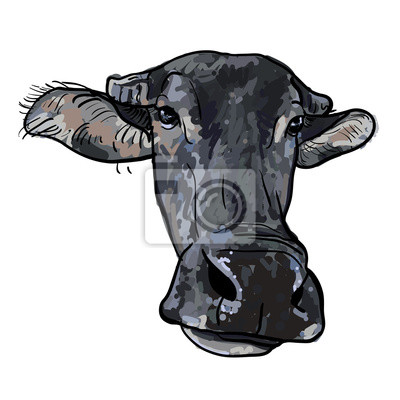 Drawing of buffalo head