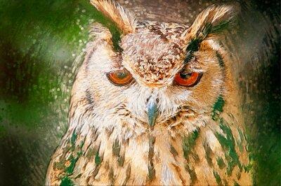 Canvas print Drawn Owl Portrait