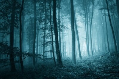Canvas print Dreamy mystic blue color foggy forest