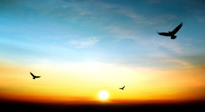 Canvas print eagle flying in the sky beautiful sunset