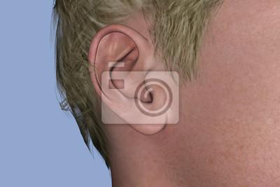 Canvas print EAR 3D