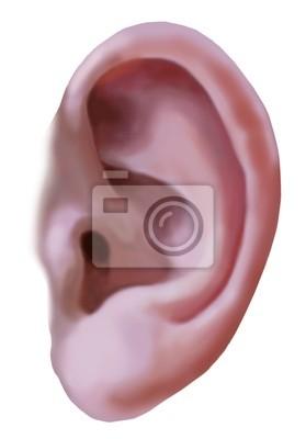 Canvas print ear