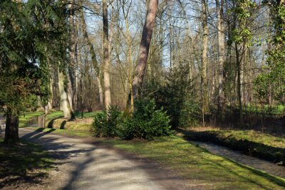 Canvas print Ein Weg und ein kleiner Bach im Wald