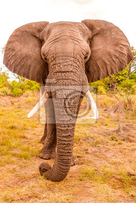 Elehant