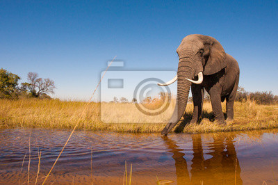 Canvas print Elephant