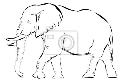 Canvas print Elephant