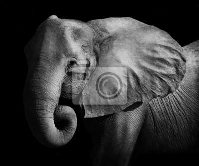 Canvas print Elephant (Artistic Processing)
