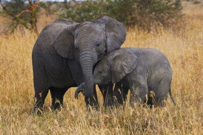 Canvas print Elephant brothers