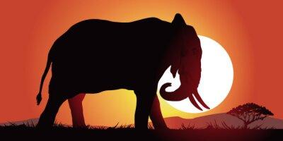 Canvas print Elephant-couche de soleil